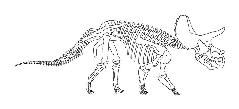 'Homer' skeleton