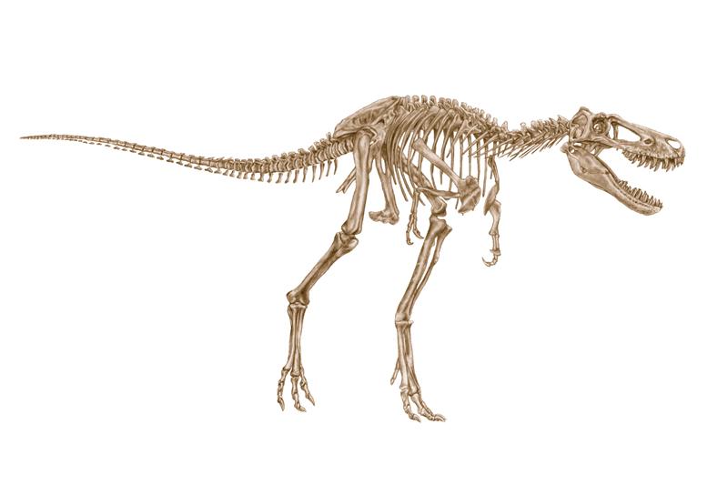 'Jane' skeleton